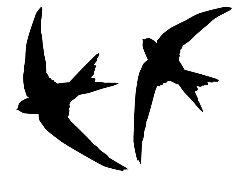 zwaluwen 3