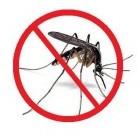 Muggen voorkomen en muggenbulten behandelen